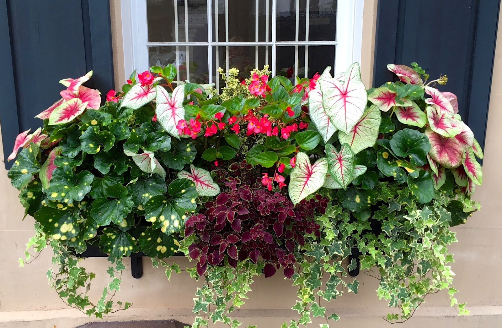 Window Box Design Ideas For Shade