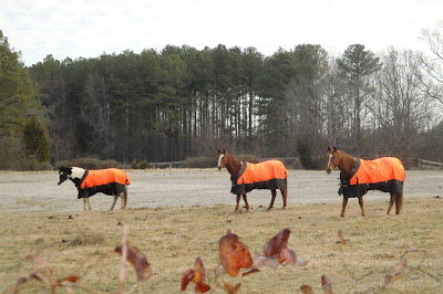 horses dressed in orange