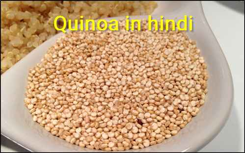 Quinoa in hindi
