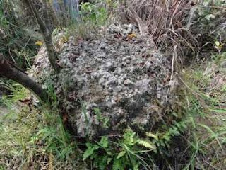 Monticulos de Orinoco