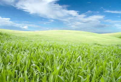 "Image ""Green Field"" courtesy of suphakit73 at www.freedigitalphotos.net"