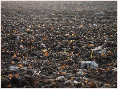 Faktor Yang Mempengaruhi Kesuburan Tanah