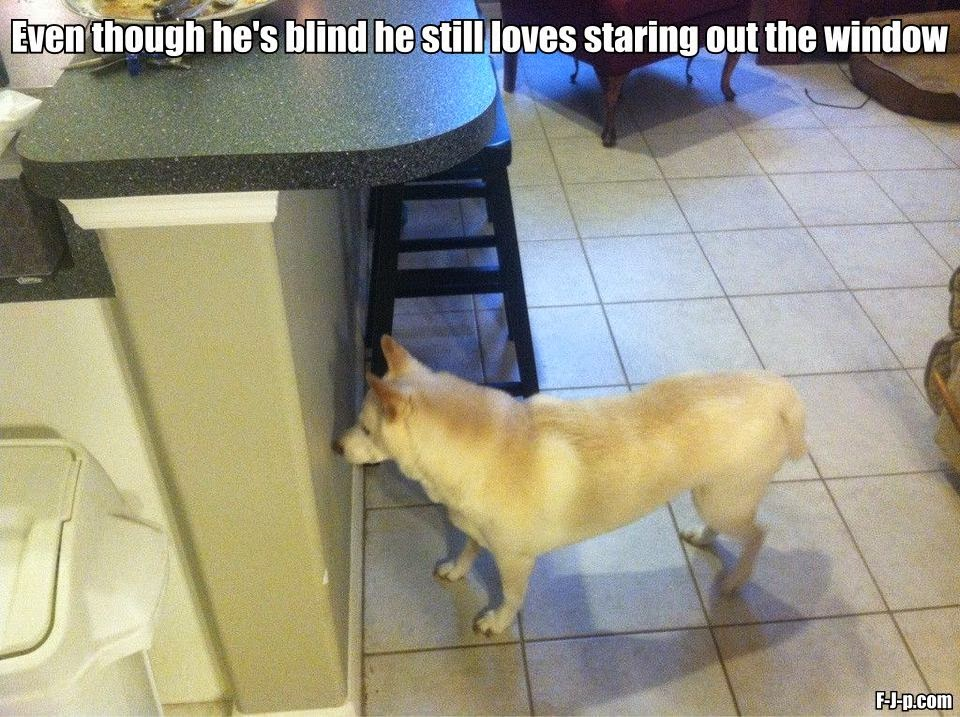 Funny Blind Dog Staring Window Joke Picture Meme
