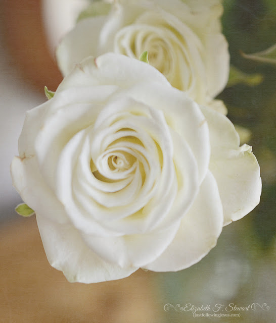 Creamy White Spray Roses Photo by @elizafaye57