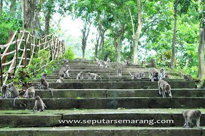 akcayatour, Goa Kreo, Travel Malang Semarang, Travel Semarang Malang, Wisata Semarang