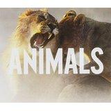 animals free digital sheet music