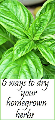 Six ways to dry your homegrown herbs, even without a dehydrator! From Oak Hill Homestead