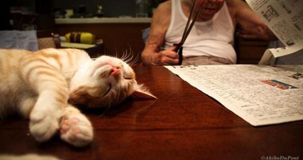 Kamu pernah dengar tidak mengenai anjing hachiko yang dikenal dengan kesetiannya Mengharukan, Kakek Pemarah ini berubah Drastis alasannya ialah Kucing Lucu ini