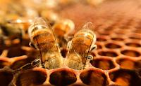 41^ settimana del miele a Montalcino - Val d'Orcia