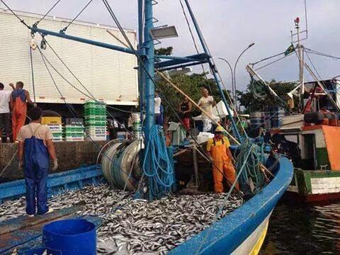 Resultado de imagem para Traineiras sardinhas