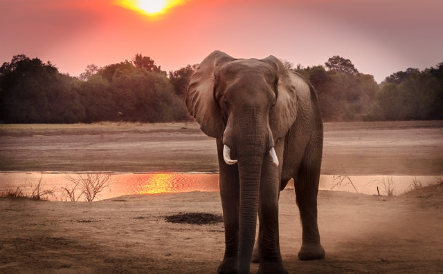 Elephant Cavan.. The court orders the end of the suffering of the sad animal