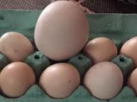 Wanita Ini Kaget Temukan Telur Ayam Raksasa, Pas Dibuka Isinya Mengejutkan..!