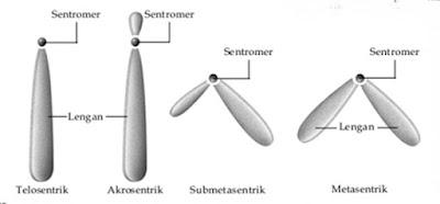 substansi genetika ppt, substansi genetika pdf