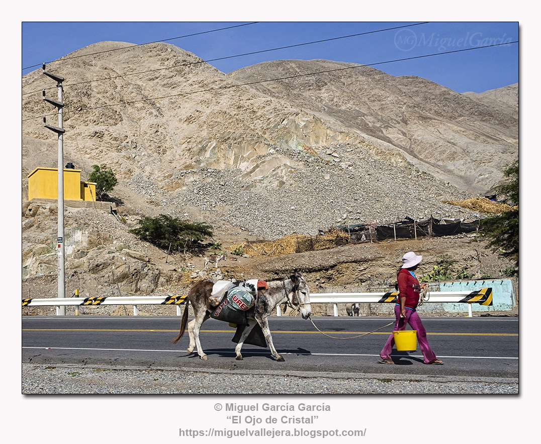 Tres asnos y mujer con balde amarillo en la ruta de Lunahuaná.