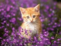 Risultati immagini per alfie gatto