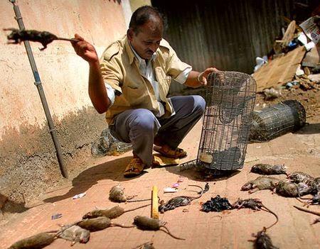 Gabalie g vaudan loz re les rats maudits - Piege a souris fait maison ...