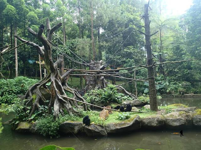 Masih tentang cerita menginap di Safari Lodge Caravan dan Taman Safari Indonesia