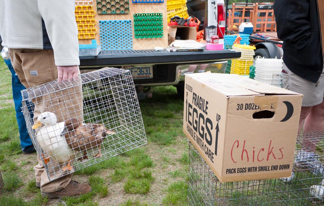 LOG ON INN: annual chicken & small animal swap meet, first