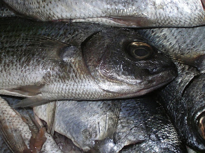 Amines are responsible for the foul smell of dead fish