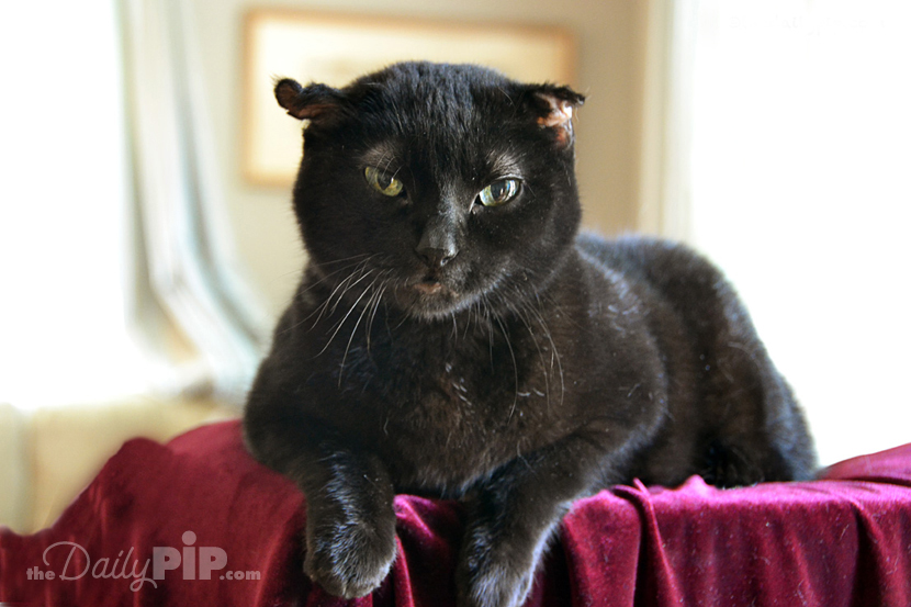 Rosie the rescued black cat gives advice on fur-busting and keeping clothing fur free
