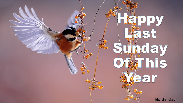 Happy Last Sunday Of The Year Birds Image
