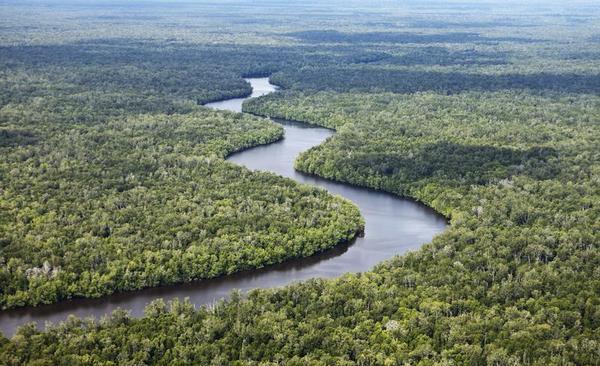 Pemerintah Congo tertarik belajar memulihkan ekosistem gambut di Indonesia