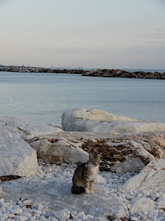 Marina Di Pisaの猫と海