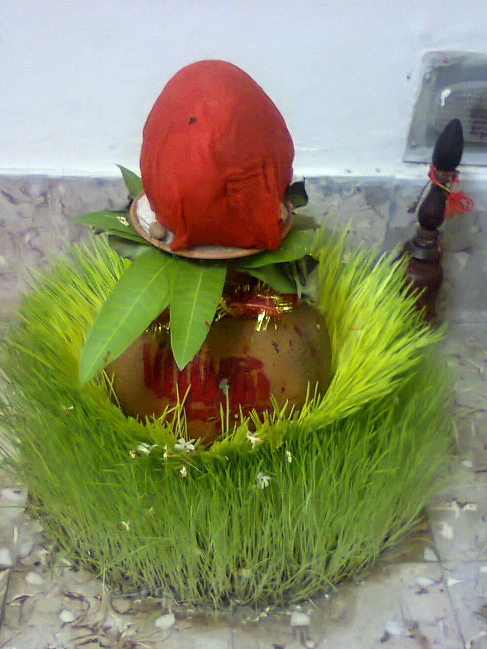 how to grow wheatgrass at home in hindi
