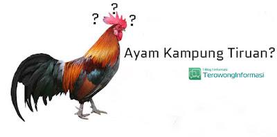 Ayam Kampung Tiruan
