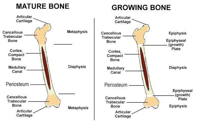 Patologi Tulang dan Persendian pada Hewan