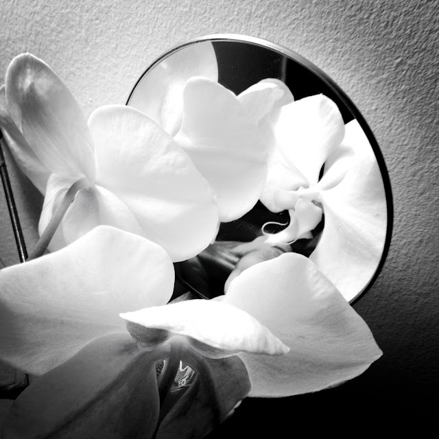 mirror, orchid, black and white, wall