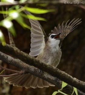 7 Tips Dan Cara Memilih Burung Trucukan Yang Bagus Dan Paling Akurat