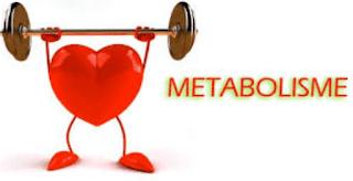 Cara Cepat Membakar Lemak Agar Metabolisme Tubuh Meningkat