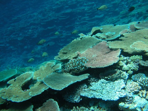 The Great Barrier Reef Has Lost Half of its Coral in the Last 27 Years