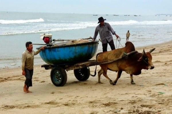 mua hải sản trực tiếp dân chài