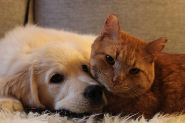Inilah Alasan Anjing Lebih Baik Daripada Kucing