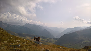 A chamois scurries away near Lago Moro.