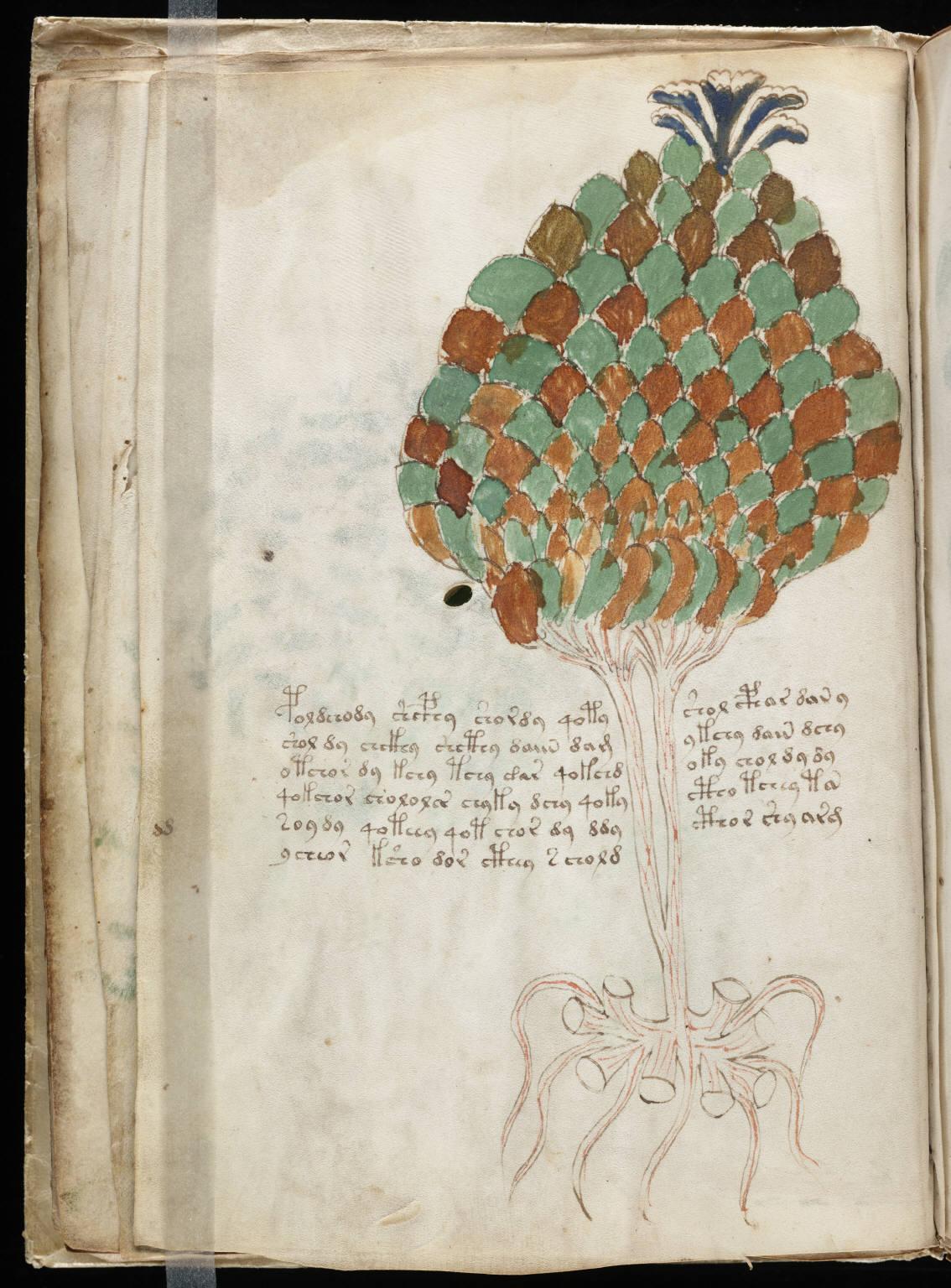 manuscrito024
