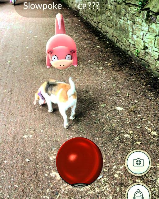 Pokemon meets beagle in newcastle