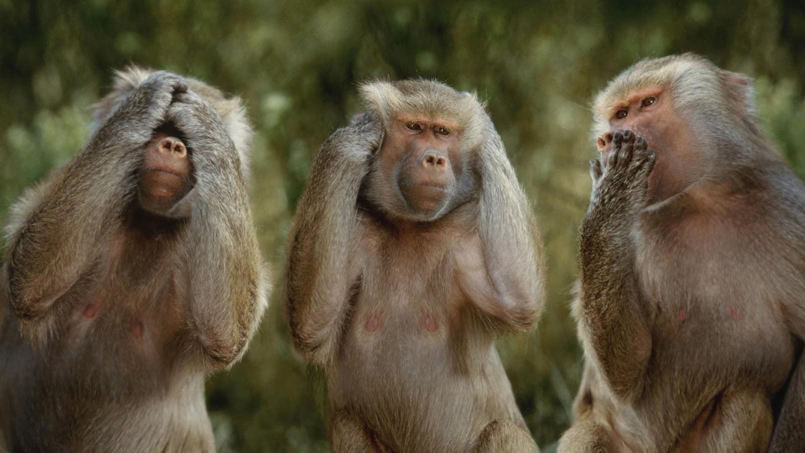 80+ Gambar Gambar Monyet Ber 3 Kekinian