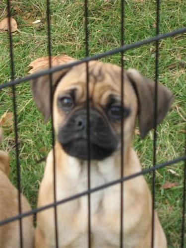 Ikbhal Cute Babies: Ikbhal: Beagle Dogs