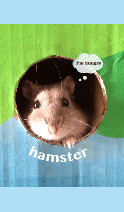 Every day with the hamster!
