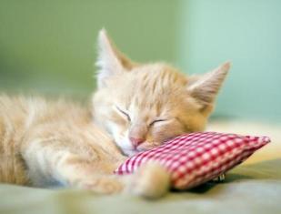 Qailulah - Tidur Siang Menurut Islam
