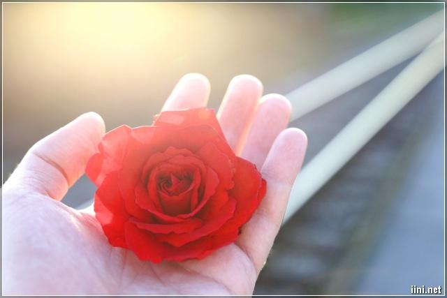ảnh tay nắm bông hoa đẹp