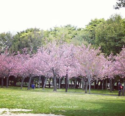 Taman Sakura Ternate, Destinasi Wisata Relaksasi dan Rekreasi Keluarga
