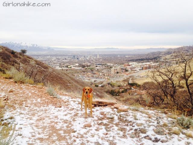 The Living Room hike, Utah, Hiking in Utah with Dogs