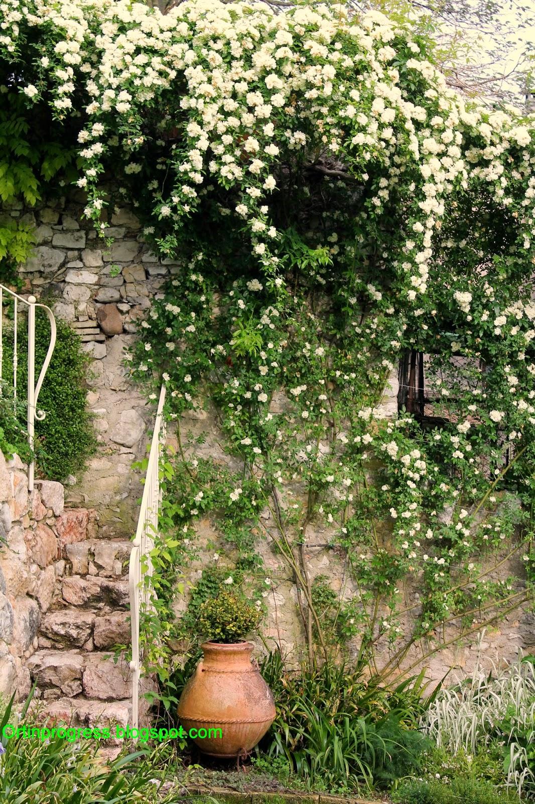 Orti in progress il giardino di casa biasi for Organizzare il giardino di casa