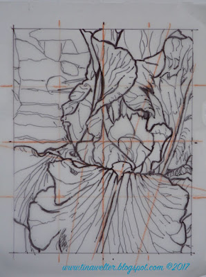 Blue Iris, second line drawing, 16 section grid, correct proportion 4 x 5, ©Tina M. Welter