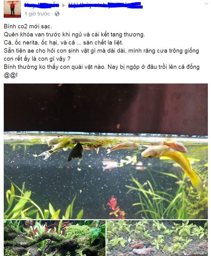 Cá chết do ngợp CO2 trong hồ thủy sinh