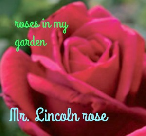 Mr. Lincoln rose